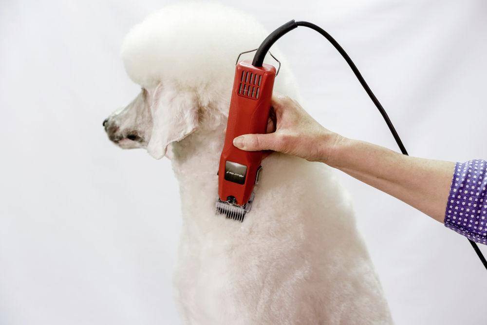 AESCULAP Favorita II Schermaschine für Tiere 2